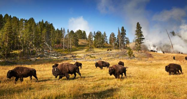Yellowstone-Skywalk-San Francisco-Yosemite 10 Days Tour YSG