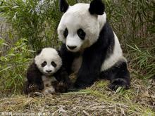 10 Days Golden Triangle & Giant Panda